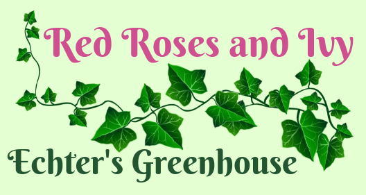 Red Roses and Ivy/Echter's Greenhouse