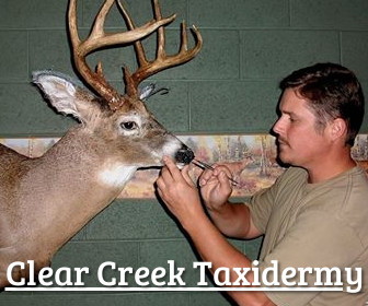 Clear Creek Taxidermy